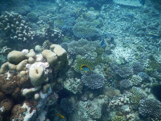 unter Wasser zur Safari Blue