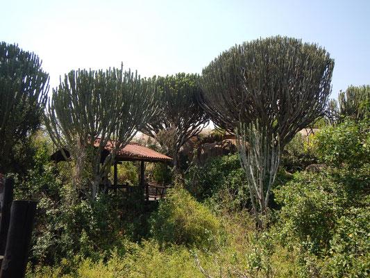 Serengeti-Zentrum