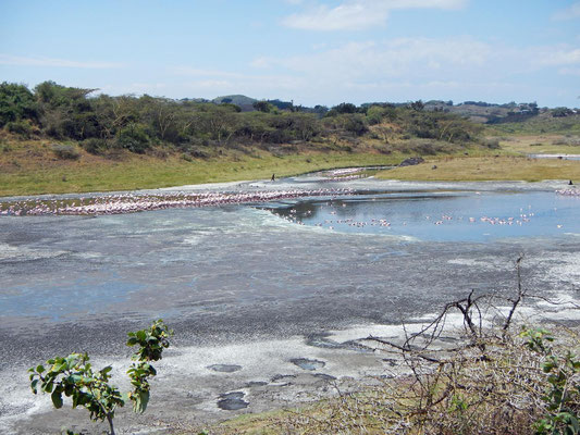 Flamingos im Momella See