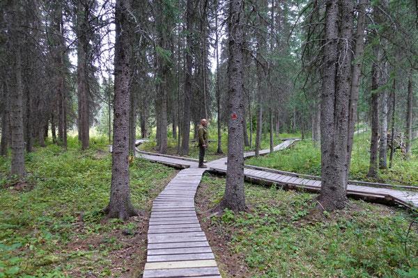 Waldwanderung...hmmm, welche Abzweigung sollen wir nehmen?