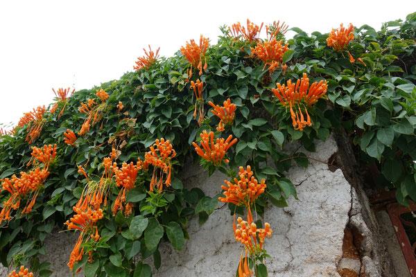 Hängende Blumenpracht