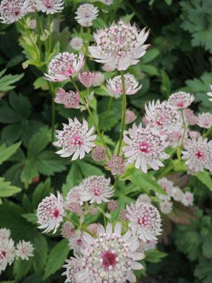 FlowerPower Blumenmeer....