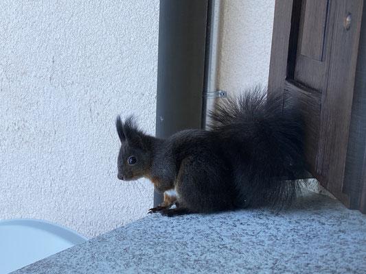 Besuch auf dem Fenstersims
