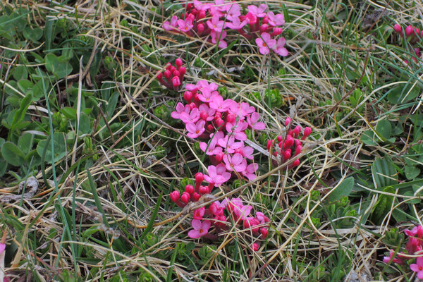 Zaghafte Blüten in der Höhe