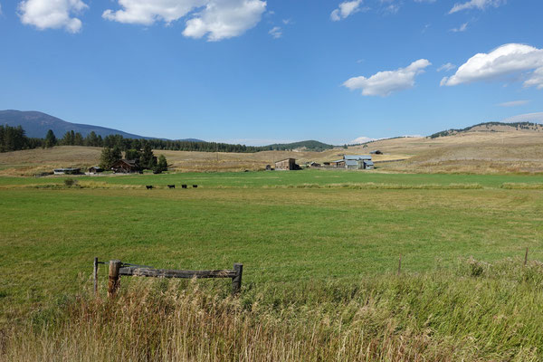Ranches, Kühe, Pferde...