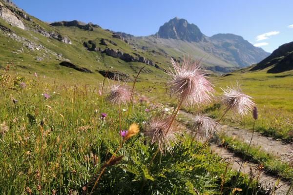 Frühlingswanderung über Blaunca, Grevalsalvas nach Sils Maria