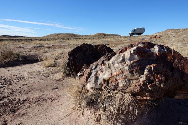 Der Iveco ist 5-jährig, der Baumstamm 200 Millionen Jahre alt!
