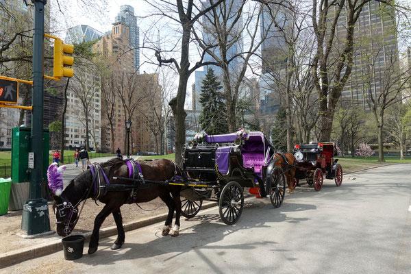 Stadtpferdchen laden zur Parktour ein