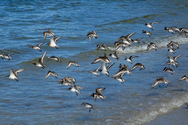 ...sehen viele Vögel