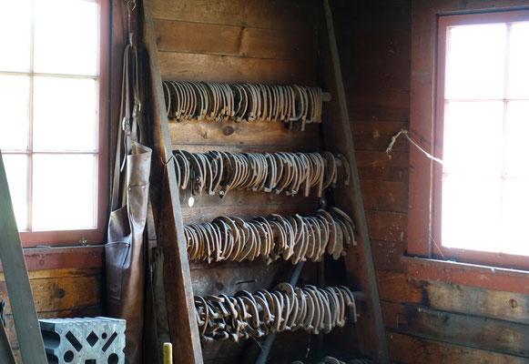 Welches Eisen braucht dein Pferd?