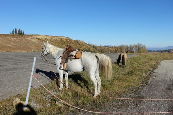 Des Hirtes Pferdchen warten geduldig...