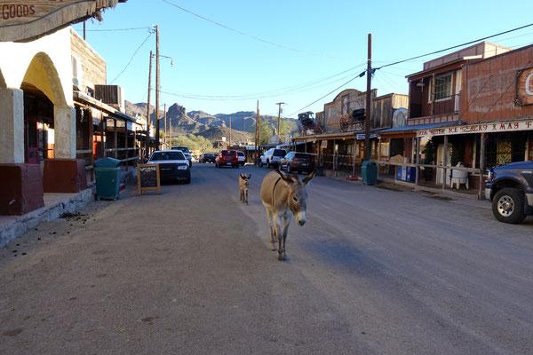 Das ganze Dorf ist voller Esel!
