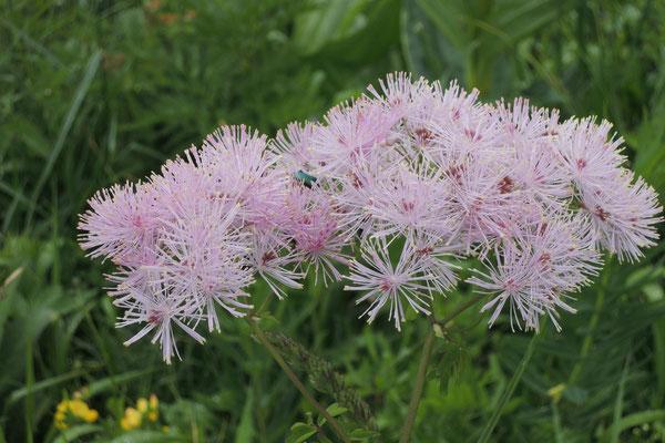 Filigrane Blüten