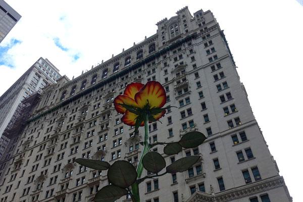 Ein Blumengruss für Alle