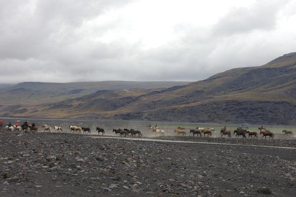 Eine Reitergruppe in flottem Tempo unterwegs