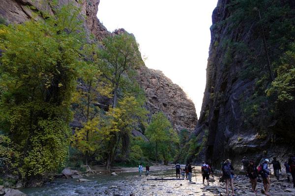 Ab hier geht der Weg nur noch im Wasser weiter - zu den Zion Narrows