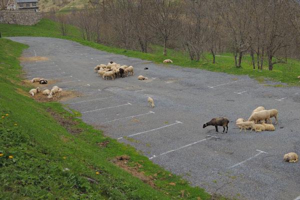Neben den wenigen Touristen bleibt genug Platz für die Schafe