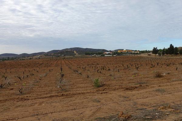 Weinland im Norden der Baja