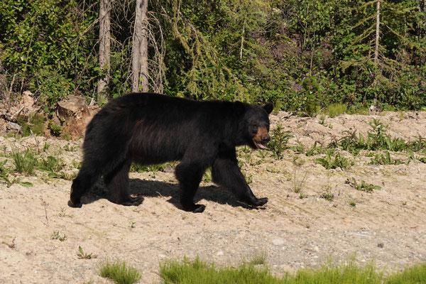 Wir sehen den ersten Bären
