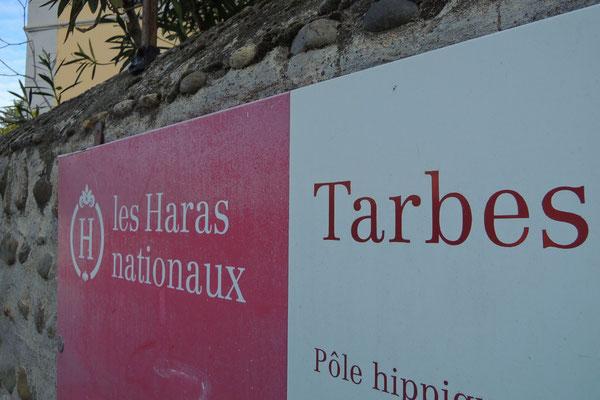 """...besuchen wir das """"Haras National"""""""
