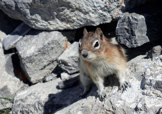 Ein neugieriges Hörnchen