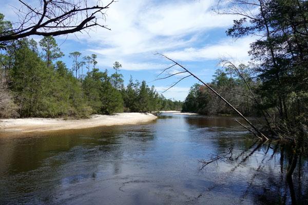 Am Blackwater River...dem schwarzen Wasser
