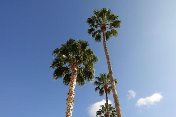 Palmengesäumte Strassen in Green Valley