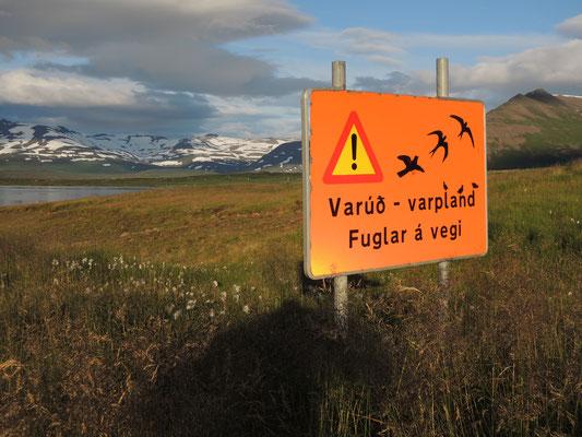 Achtung...angriffslustige Vögel! Mit denen ist nicht zu spassen...