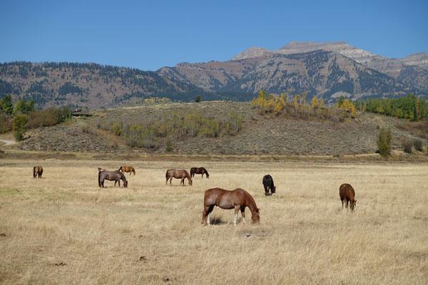 mit glücklichen Pferdchen