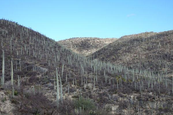 Zwischen Kaktussen...