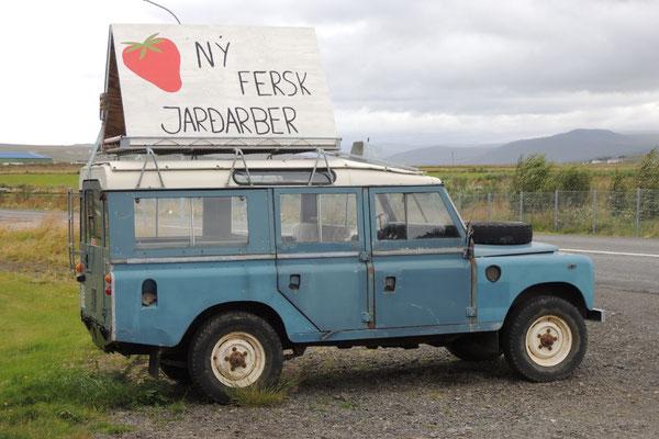 Hier gibt es isländische Erdbeeren zu kaufen