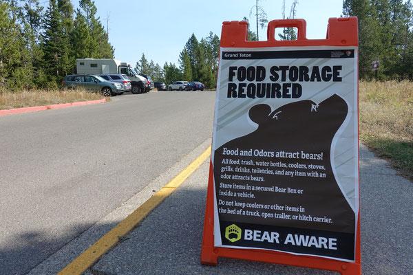 Bären sind immer und überall ein Thema