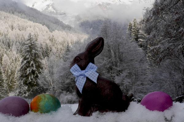 Der Hase kämpft sich durch den Schnee...