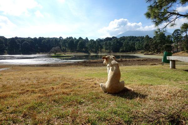 """Auch der Parkhund geniesst die Natur im Naturpark """"El Ocotal"""""""