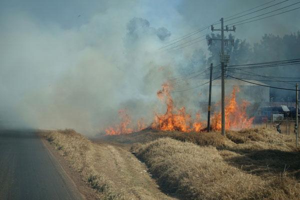 Überall werden Felder abgebrannt, auch gleich neben der Strasse!