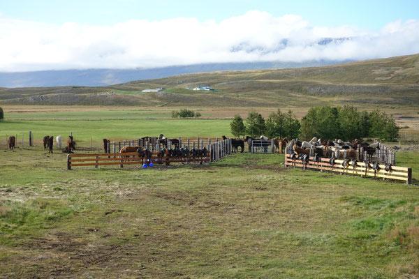 Brav warten die Pferdchen