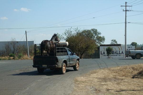 Wohin geht deine Reise, schönes Pferd?