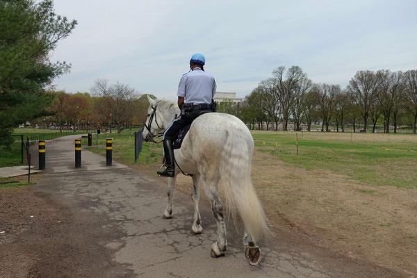 Hoch zu Pferd gehts auf Patrouille