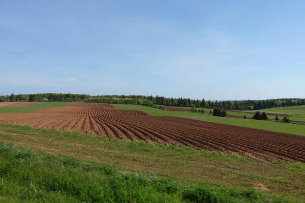Landwirtschaft auf P.E.I.