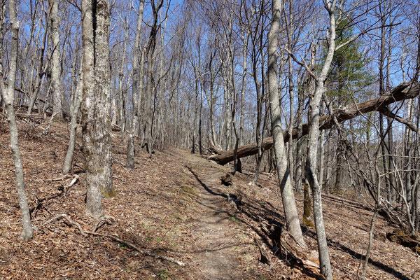 Wir wandern auf dem Appalachian-Trail