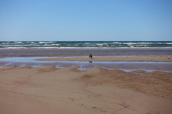Der Adler sitzt am Strand