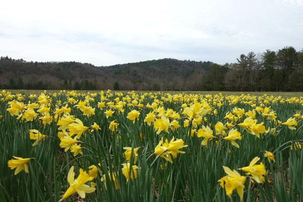 Der Frühling macht die Wiesen bunt