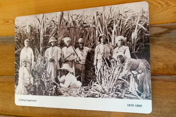...die Arbeiter der Plantage