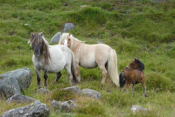 Wilde Ponys