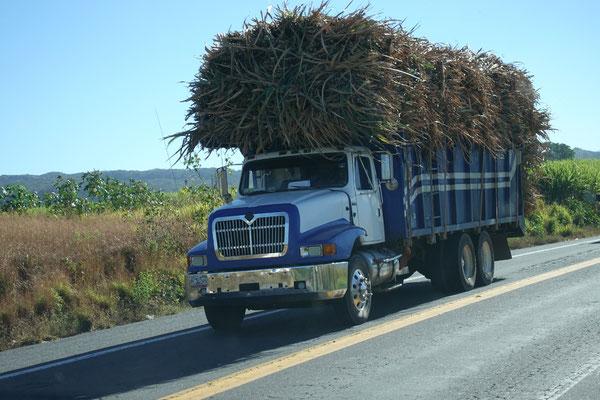 Zuckerrohr unterwegs zur Verarbeitung