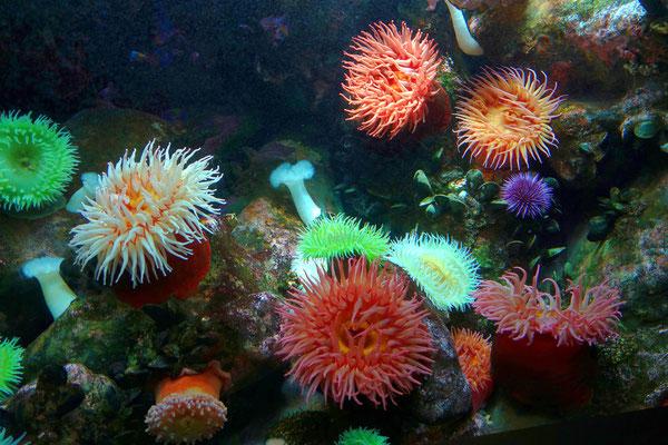 Farbige Unterwasserwelt im Aquarium von Baltimore