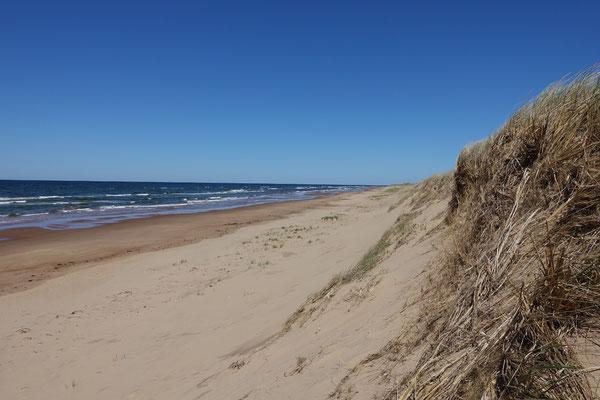 Dünen und Strand so weit das Auge reicht