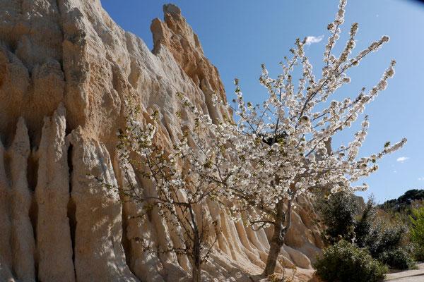 Zarte Frühlingsblüten...