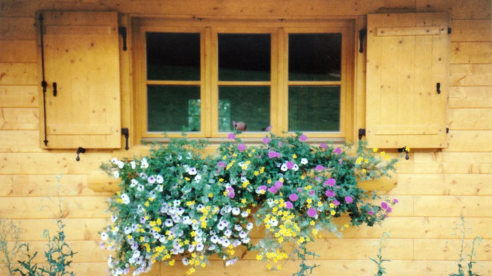 Flowers in front of the windows.