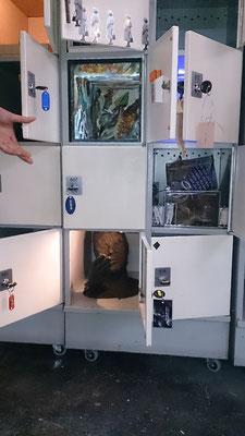 Prokekt Locked in Kunststation Delden, NL